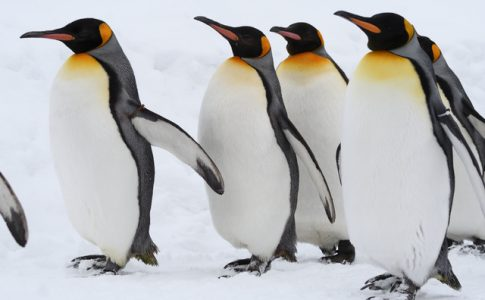 旭川の一番の人気スポットといえば、旭山動物園