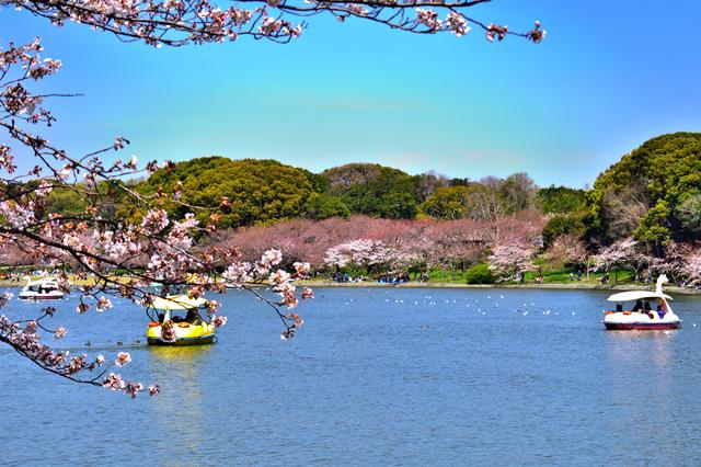 明石公園のボート