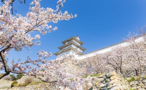 明石城の桜