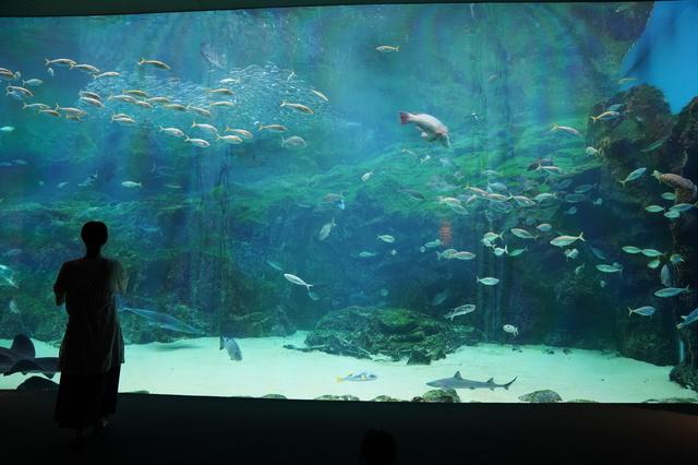 九十九島水族館(海きらら)