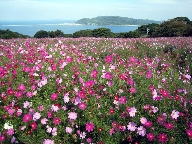 季節の花々が迎えてくれる