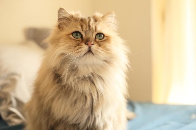 猫で描かれているカード