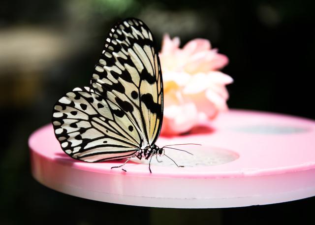 チョウ温室は楽しめる