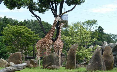 正式名称「よこはま動物園ズーラシア」