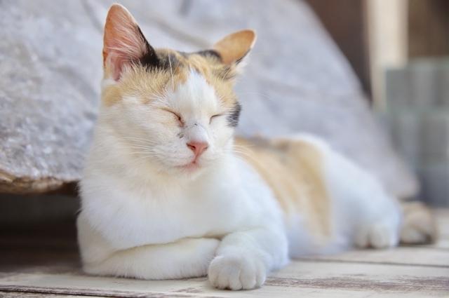 島民よりもネコの数が多い