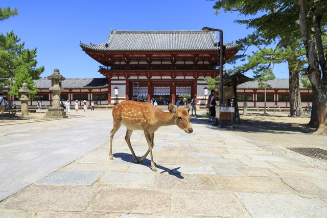 奈良県に住んでいます