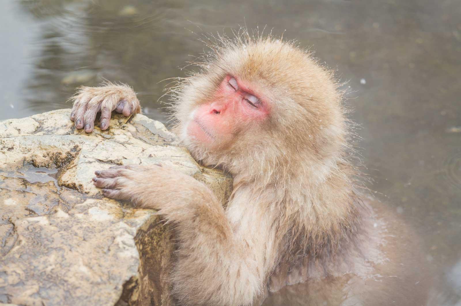 猿が温泉に入っているところを見てみたい