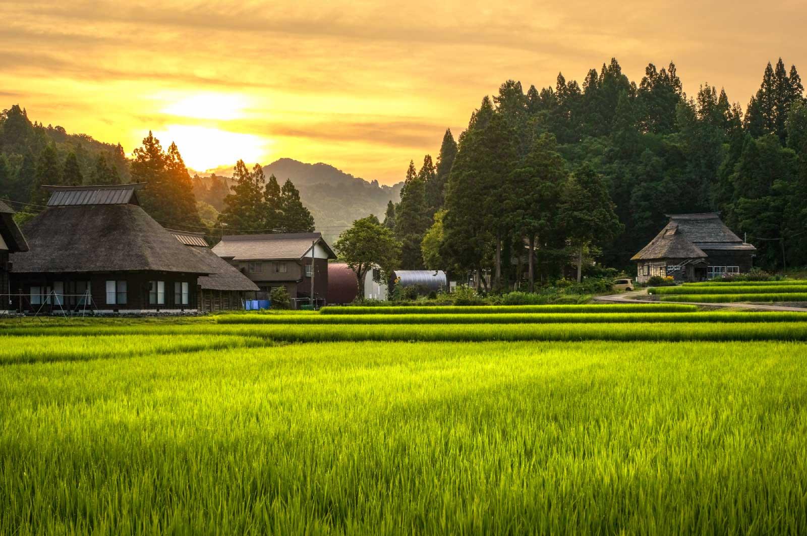 夕日が沈んでいく田んぼの風景
