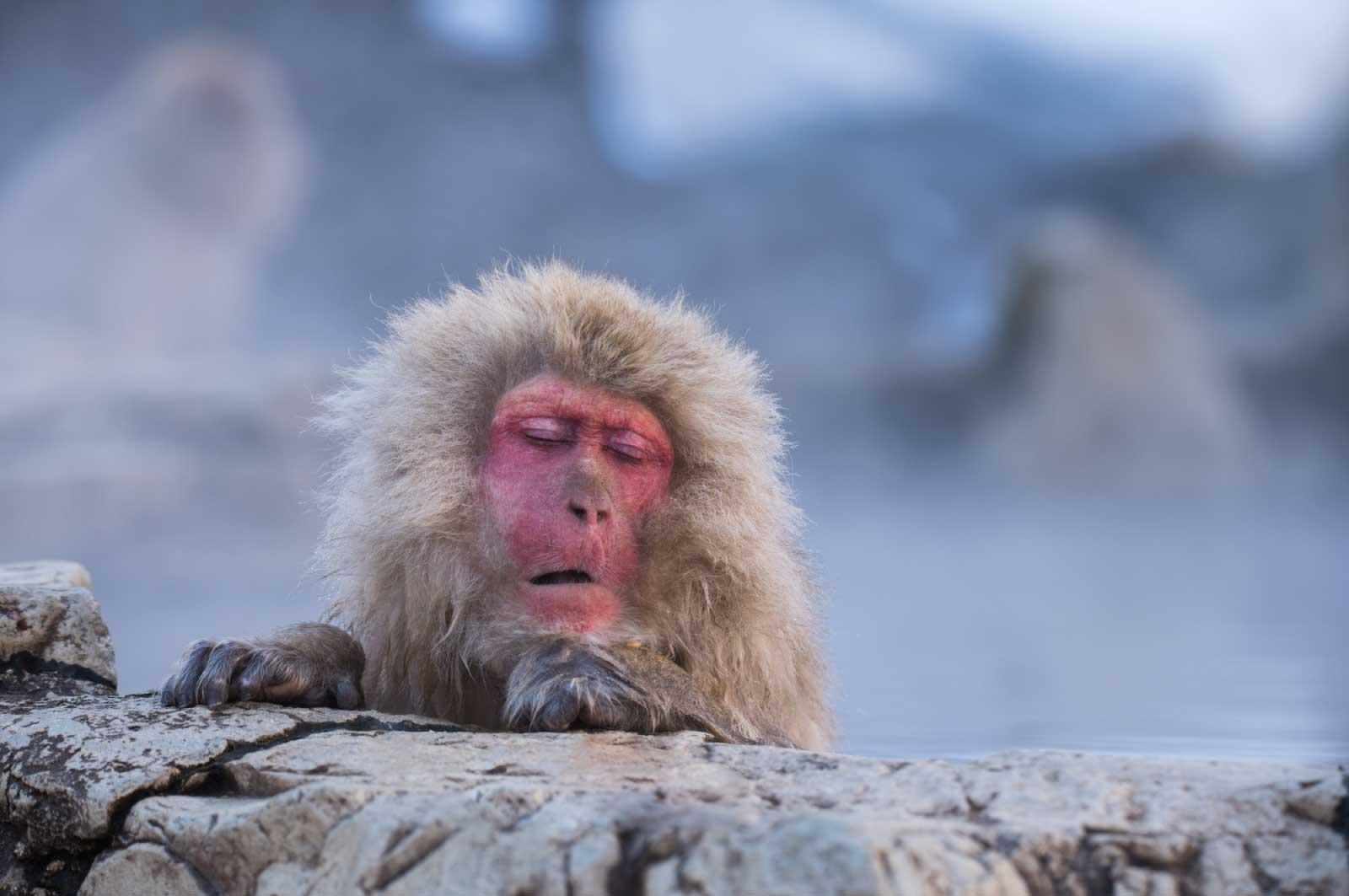 """""""温泉""""と""""猿""""が結び付く"""