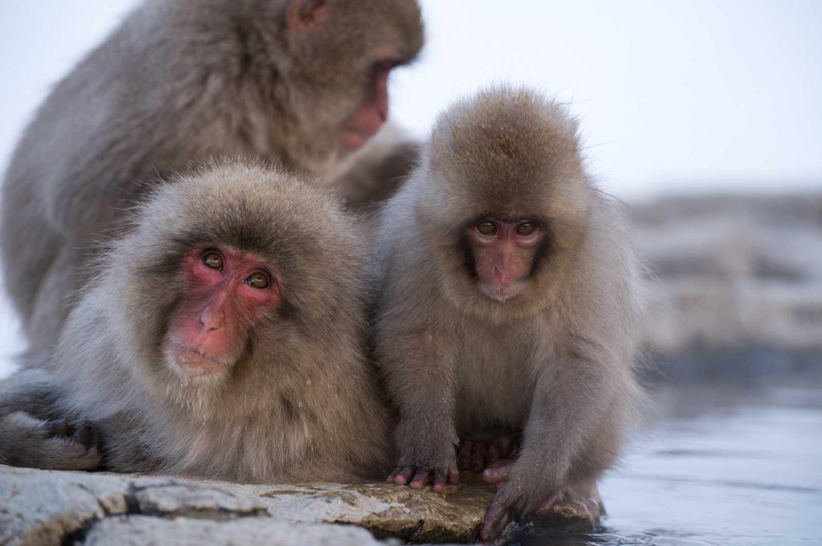 思い浮かべたのが「温泉と猿」