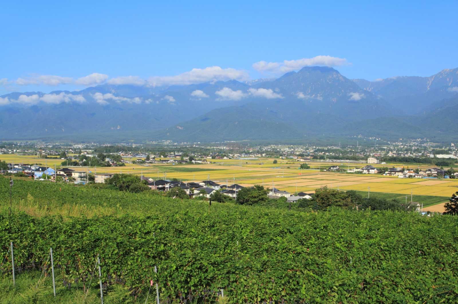 日本でワインといえば、やっぱり長野県