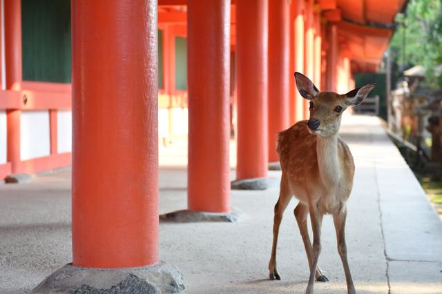 奈良市在住の21歳の女子大生