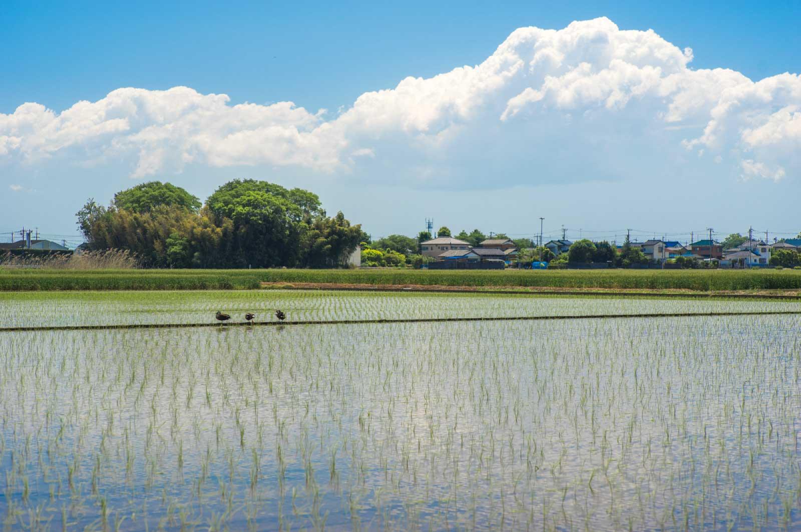 新潟の、ある町の農家の人