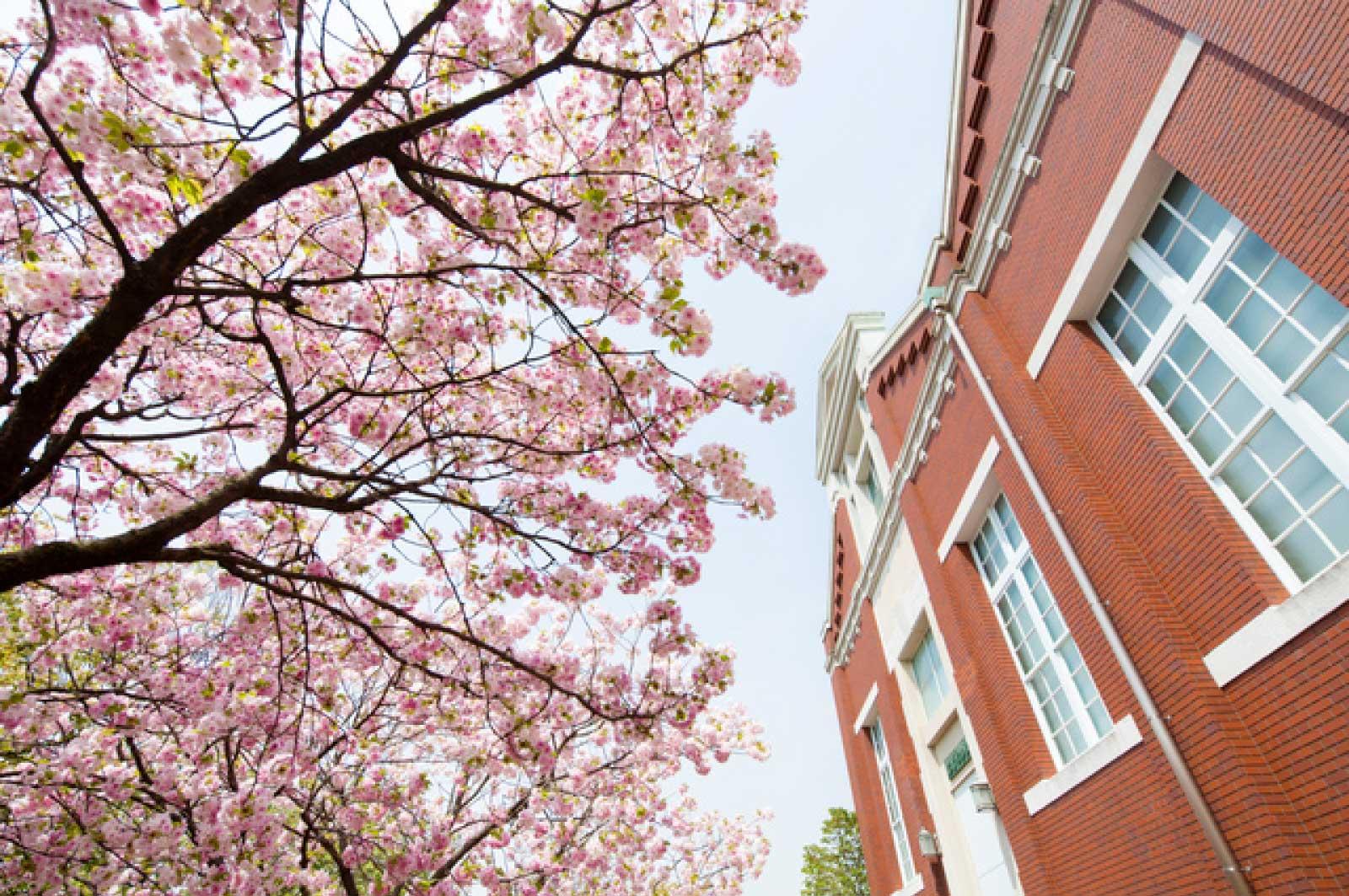 「造幣局」と「桜の通り抜け」