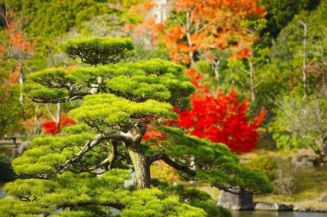 日本政府主導で造園された庭園