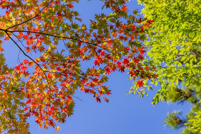紅葉で色鮮やかに染まっていました
