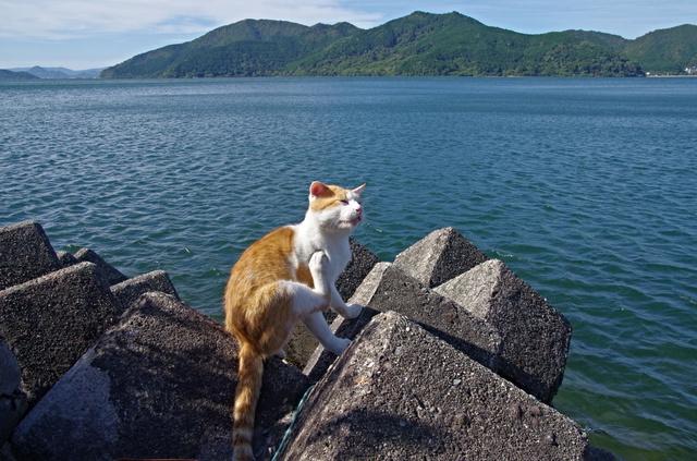 沖島に住み着いた猫