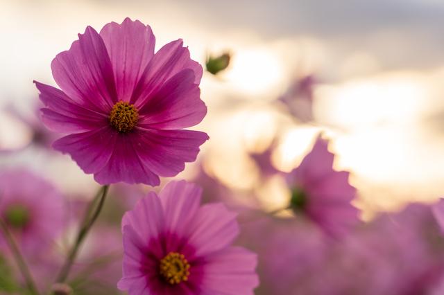 花の咲く時期