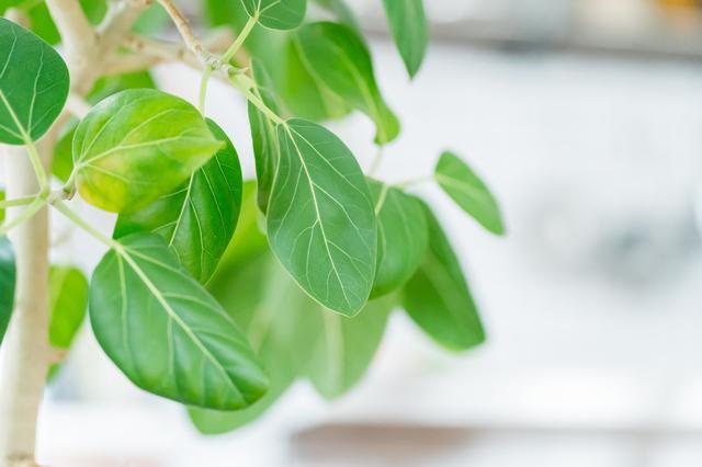 自宅にある観葉植物