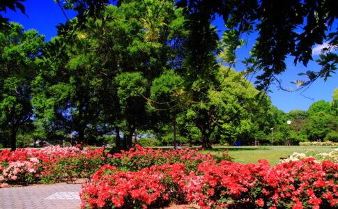 入場無料の尼崎農業公園