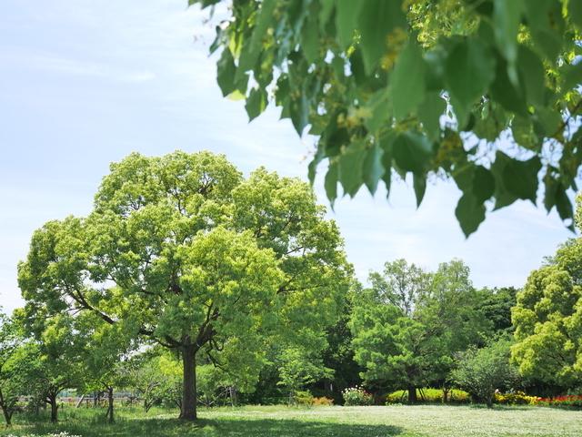 初夏の尼崎農業公園
