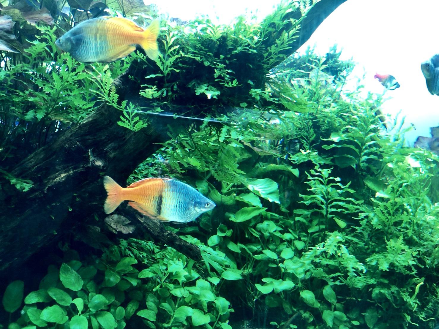 熱帯魚について詳しいことは分かりません…
