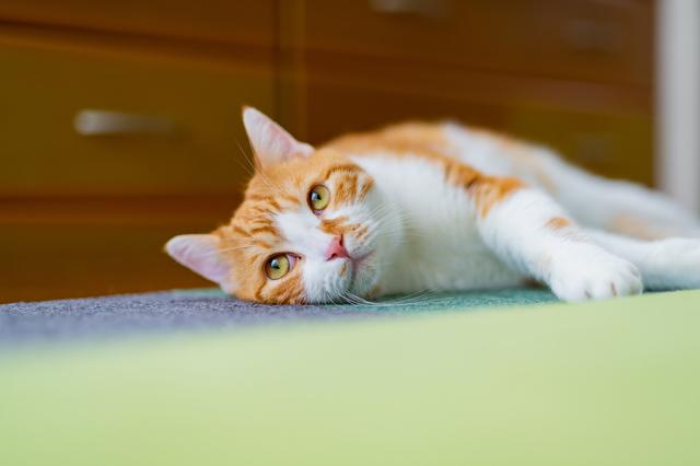 SNSを通じて猫好きの女性から連絡が