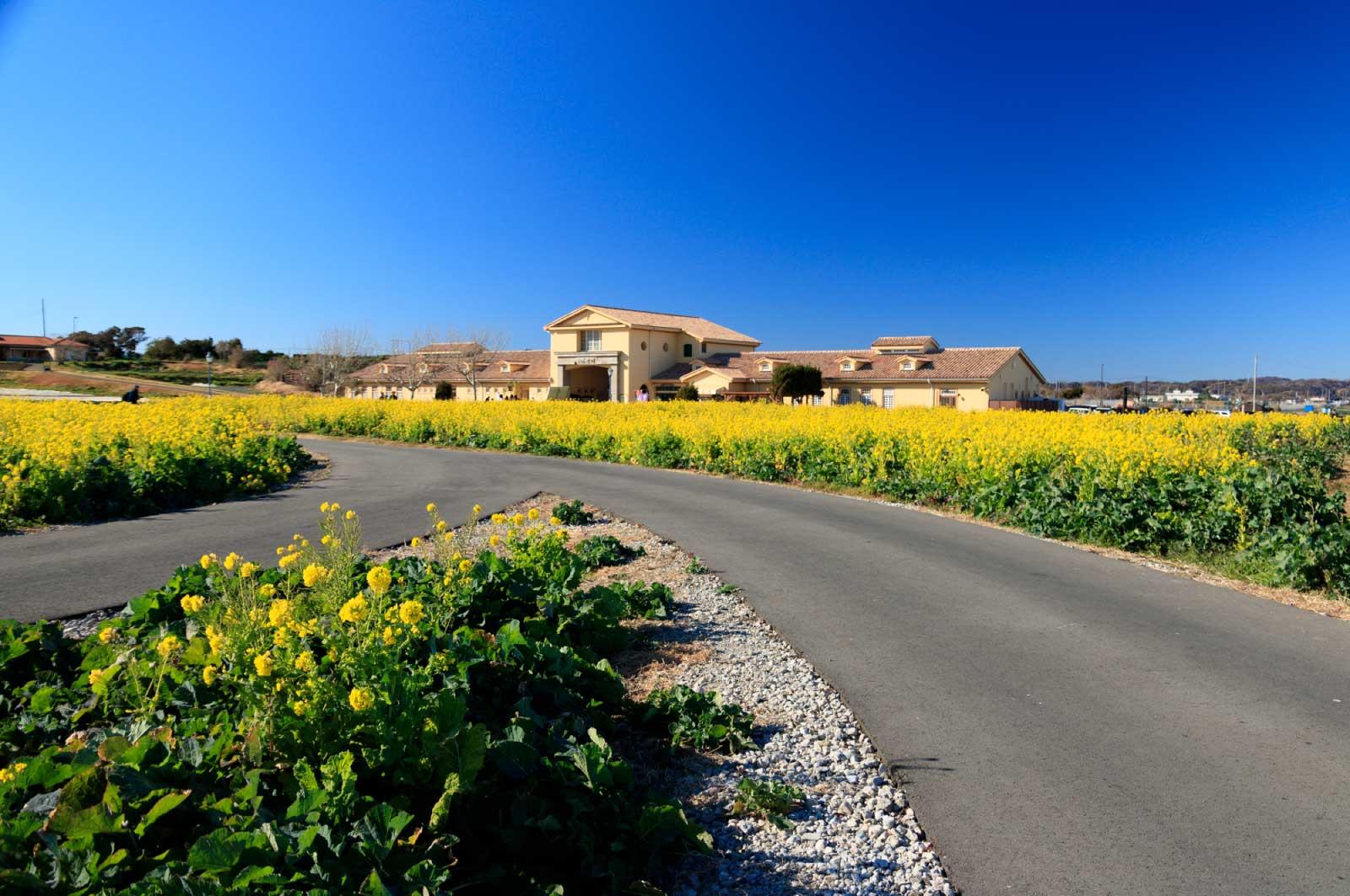 ソレイユの丘は、三浦半島の西海岸沿いの小高い丘の上にある公園施設