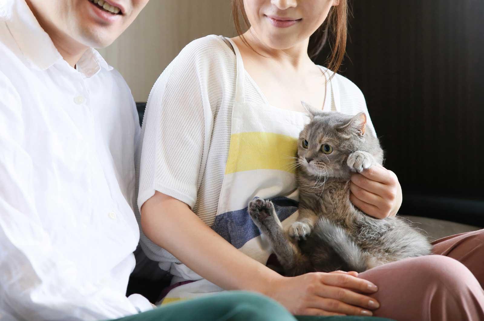 猫を飼い始めてから3ヶ月で彼女ができた
