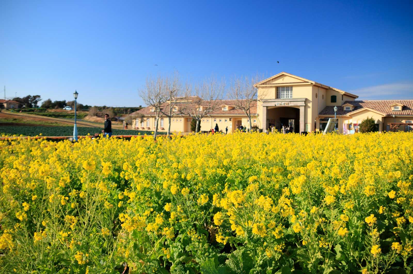 園内自体は「村のエリア」「街のエリア」「水のエリア」「まきばのエリア」という4つのエリアに分かれています