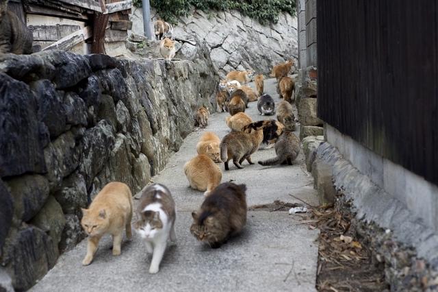 青島で暮らす猫