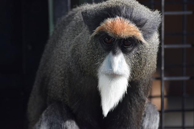 ブラッザモンキー(福山市立動物園)