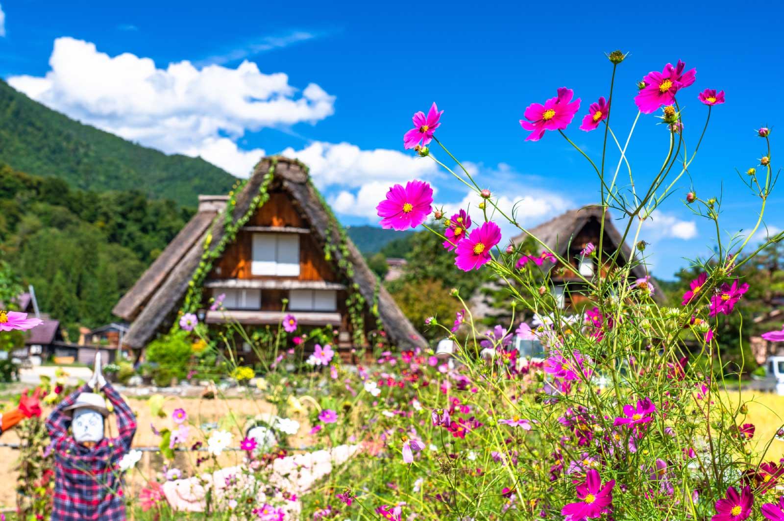 岐阜の花スポット