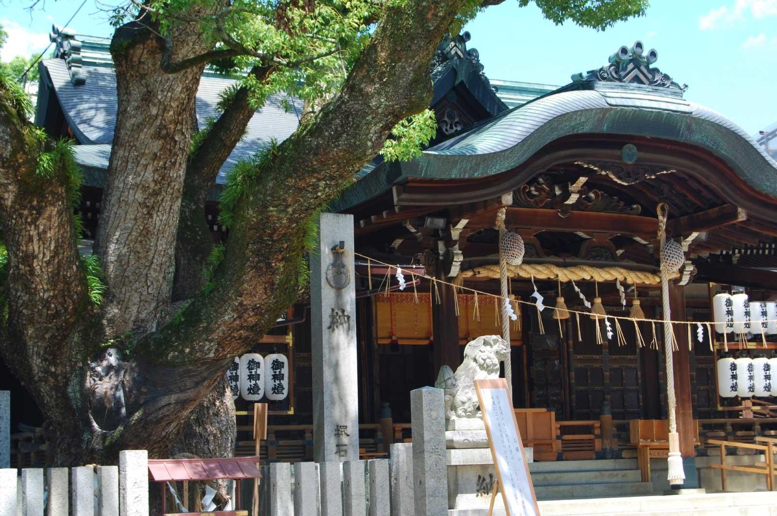 石切劔箭神社(東大阪)のくすの木