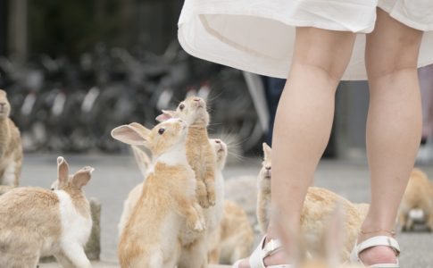ウサギが生息