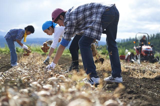 北海道で農業体験する人々