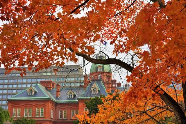 紅葉と北海道庁旧本庁舎