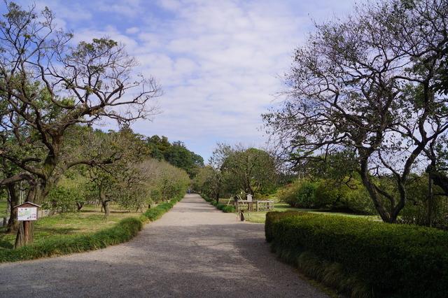 都市公園世界2位の面積を誇る偕楽園(茨城)