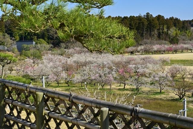 梅の咲く庭園