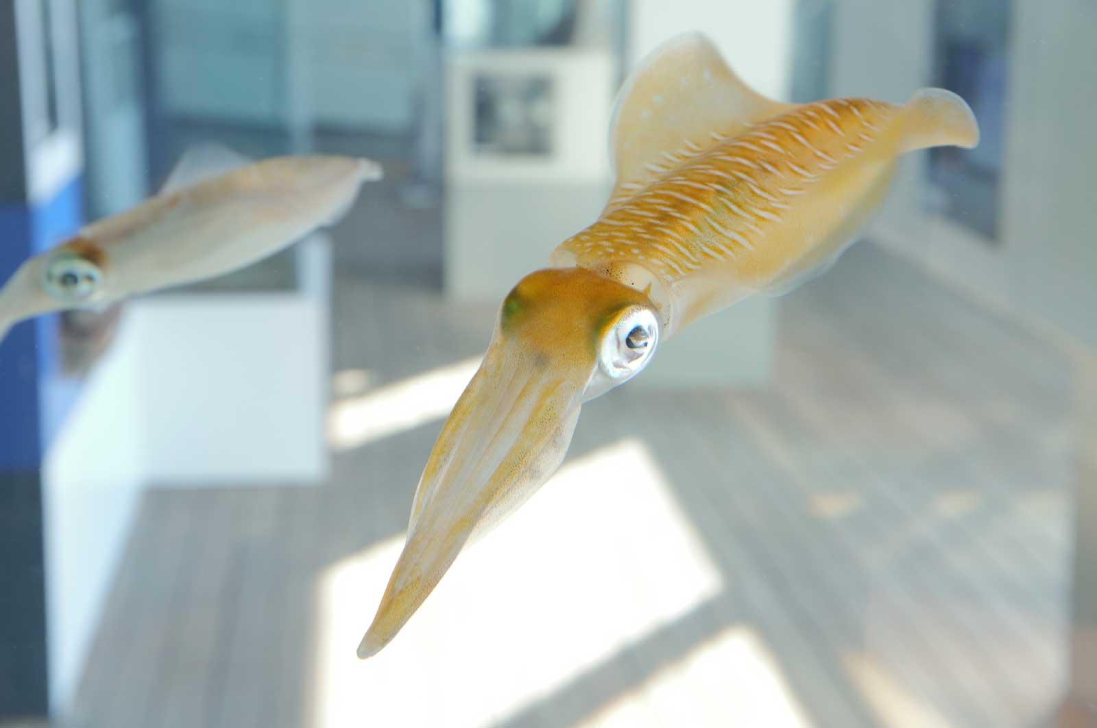 通常の水族館とは違う個性的な展示