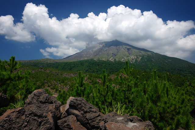 桜島の溶岩が落ちている