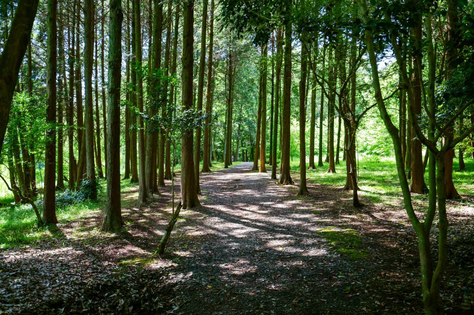 手賀の丘公園