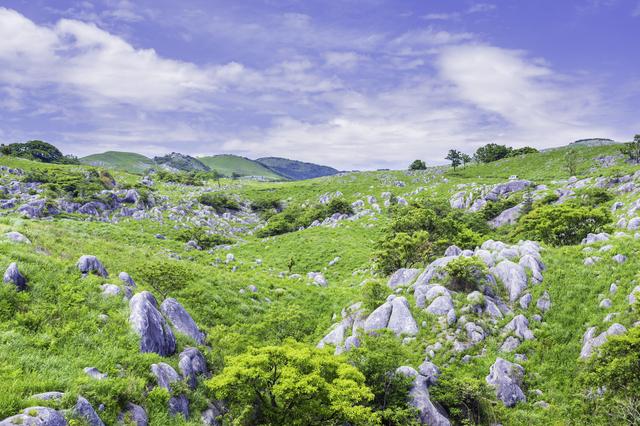 カルスト台地には緑の広がる地面に、不規則にたくさんの溶け残った岩が残って