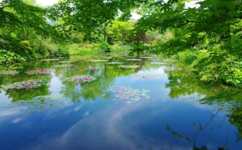 池が美しいモネの庭