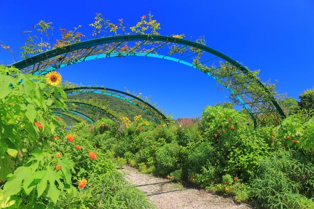 マルモッタンの花の庭