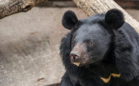 阿蘇カドリー・ドミニオンのクマ