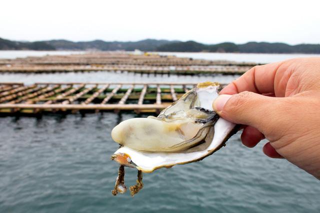生浦湾の牡蠣