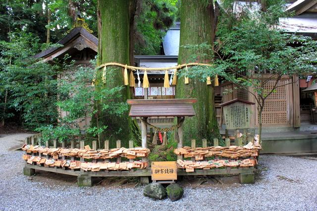 夫婦杉(高千穂神社)