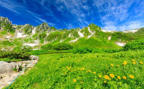 高山植物の花が咲き