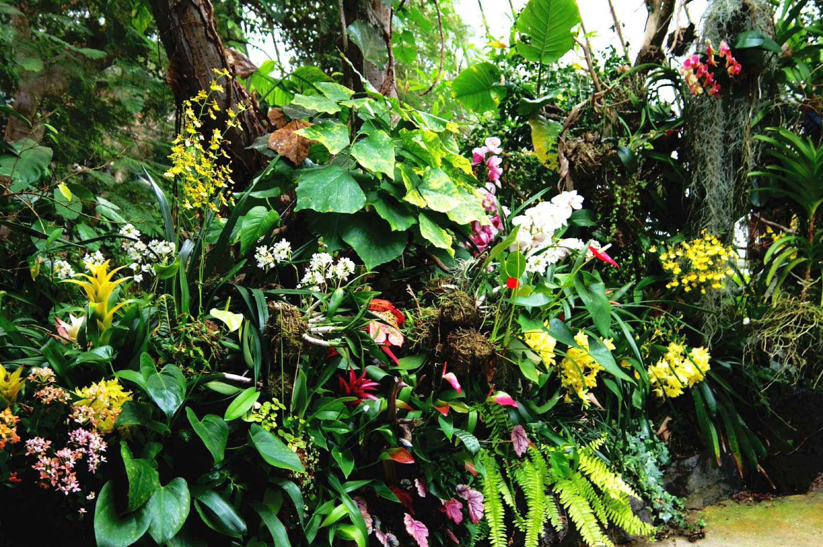 長崎バイオパークの植物園